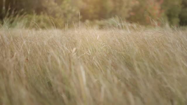 Détendez-dans l'herbe
