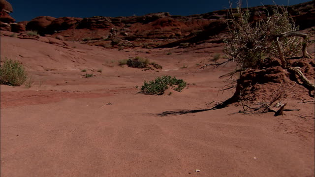 wind kicks up sand around sparse shrubs at the grand canyon. - cespuglio video stock e b–roll