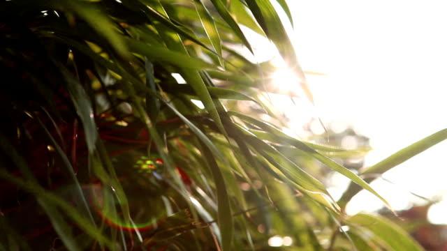 vídeos de stock, filmes e b-roll de vento folha de sol - folha de bambu