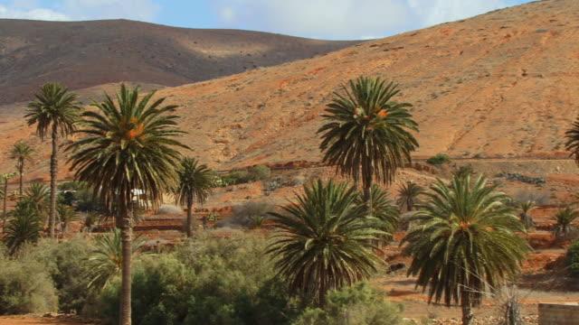 ms, pan, wind mill amongst palm trees in arid landscape / vega de rio palmas, fuerteventura, canary islands, spain - fächerpalme stock-videos und b-roll-filmmaterial