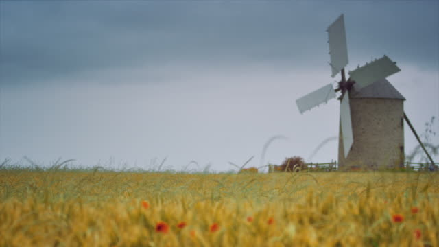 ms, wind mill in a cereal field, flowers, cloudy sky - ブルターニュ点の映像素材/bロール