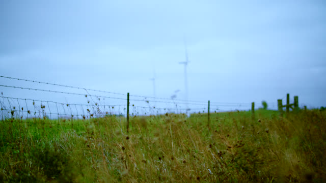 Wind power plant in Nebraska, USA. Focus on the grass, with the wind turbine defocused