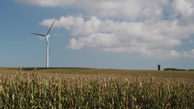 wind powered turbine turns in a large field of corn. - nebraska stock videos & royalty-free footage