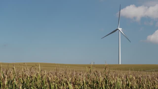 vidéos et rushes de wind powered turbine turns in a large field of corn. - silo