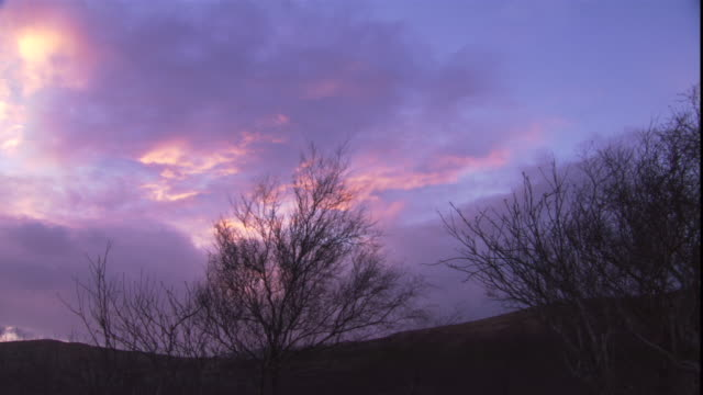 wind rustles bare trees during a purple sunset. - dusk stock videos & royalty-free footage