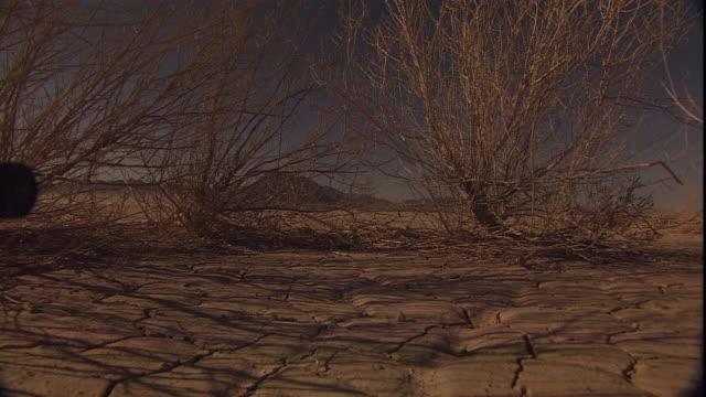 wind rustles desert shrubs on dry, cracked ground. - nevada stock videos & royalty-free footage