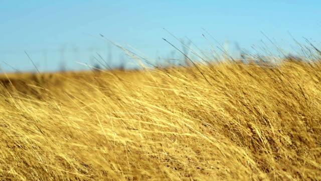 wind subtilis - 干し草点の映像素材/bロール