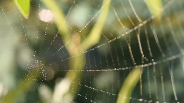 Wind through a dewy spiders web