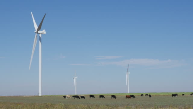 Wind Turbine and a herd of cattle