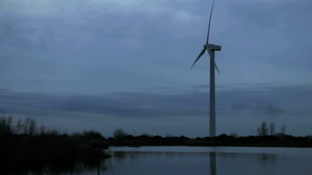 wind turbine and birds - vogelschwarm stock-videos und b-roll-filmmaterial