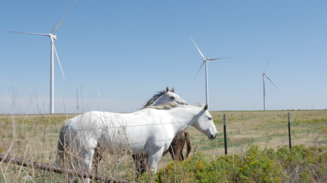 Wind turbine and horses