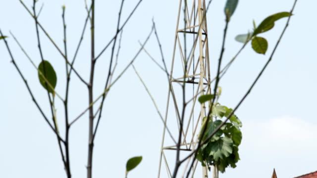 Wind turbine in thailand