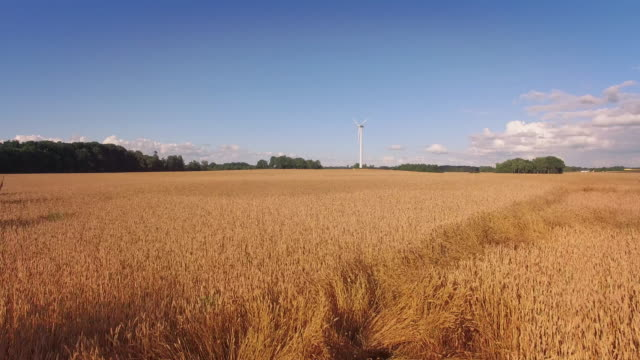 wind turbine on a wheat field - mill stock videos & royalty-free footage