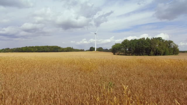 wind turbine on a wheat field - curve stock videos & royalty-free footage