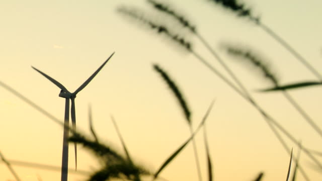 ms wind turbine spinning with wheat blowing in foreground/ kewaunee, illinois - selective focus stock videos & royalty-free footage
