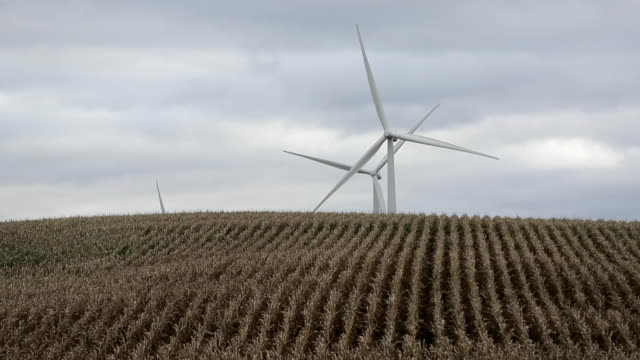 wind turbines are seen in a corn field on october 11 2019 in baxter iowa the 2020 iowa democratic caucuses will take place on february 3 making it... - maize stock videos & royalty-free footage