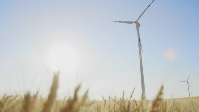 la wind turbines in a field of golden wheat - selective focus stock videos & royalty-free footage