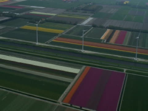 AERIAL wind turbines in Dutch flower fields, North Holland province
