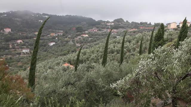 wind with fog, mediterranean vegetation - liguria stock videos & royalty-free footage
