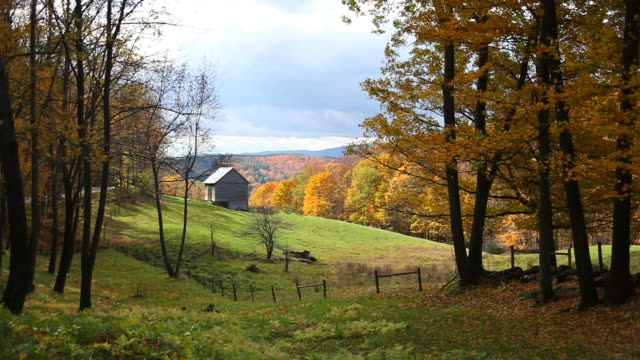 windblown autumn leaves - vermont stock videos & royalty-free footage