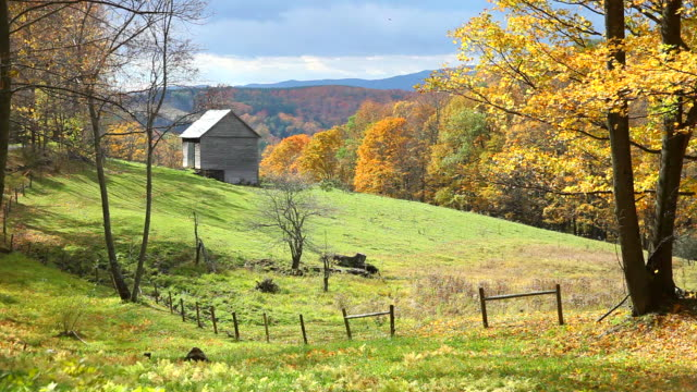 windblown autumn leaves - barn stock videos & royalty-free footage