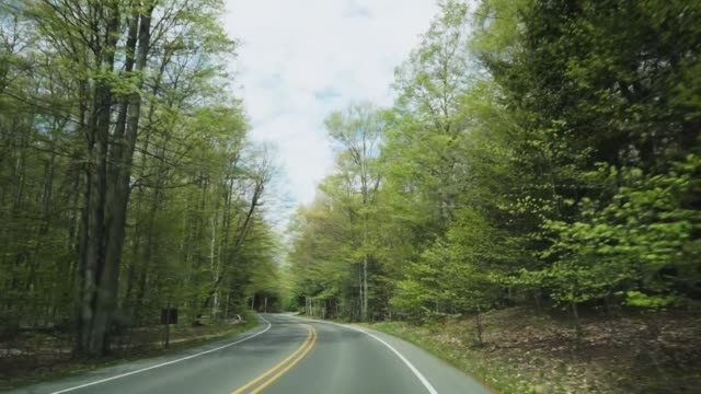 winding forest road - lakeshore stock videos and b-roll footage