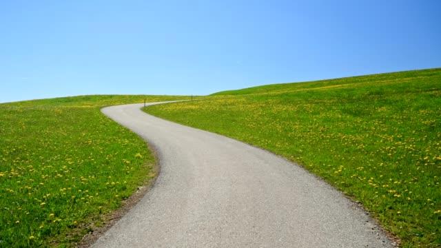 Winding road between flowering dandelion meadow, Seeg, Allgau, Bavaria, Germany