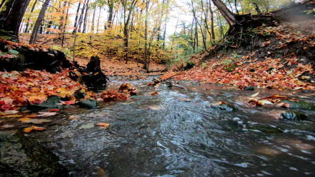 winding road in autumn surrounded by maple leave - gravel stock videos & royalty-free footage