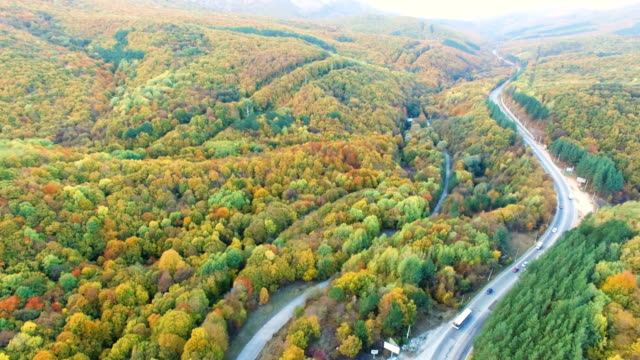 AERIAL: Winding road in colorful woodlands