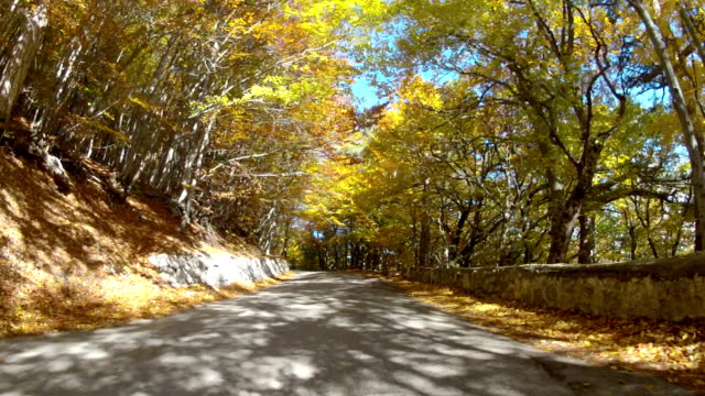 winding road through colorful autumn forest
