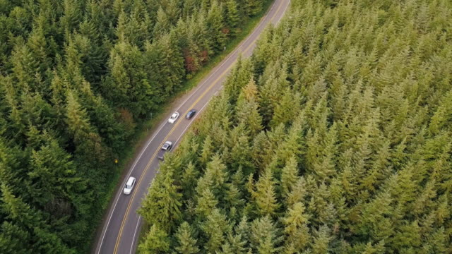 winding road through managed forest in pacific northwest - aerial shot - stato di washington video stock e b–roll