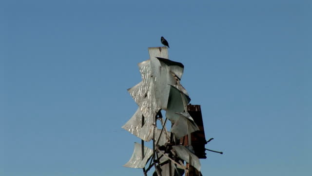windmill and bird of napa valley - crucifers stock videos & royalty-free footage