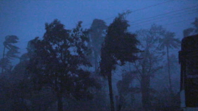 winds lashes trees, phillipines - gale stock videos & royalty-free footage
