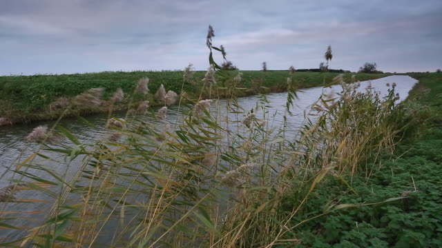 windswept view over a fenland drain waterway. - fen stock videos and b-roll footage