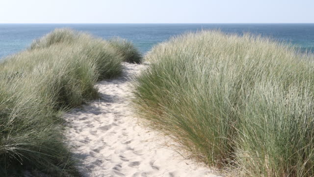 windy dunes in sunlight - marram grass stock videos and b-roll footage