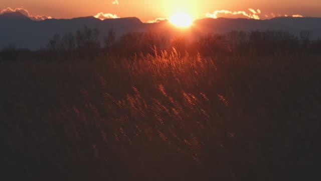 vídeos de stock e filmes b-roll de windy evening sunset over wetland - pasture
