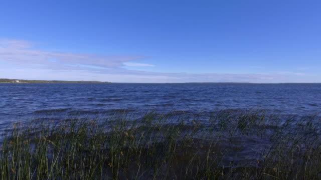 windy lakeshore - bulrush stock videos & royalty-free footage