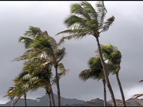 vídeos y material grabado en eventos de stock de windy palmeras. - isla grande de hawái islas de hawái