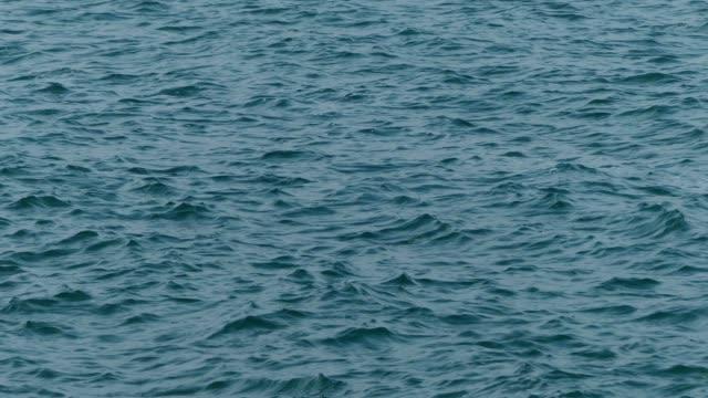 vídeos y material grabado en eventos de stock de viento mar tropical - profundo