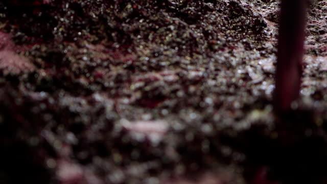 wine production - 潰された点の映像素材/bロール