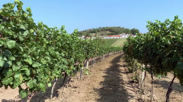 Wine Route Austria