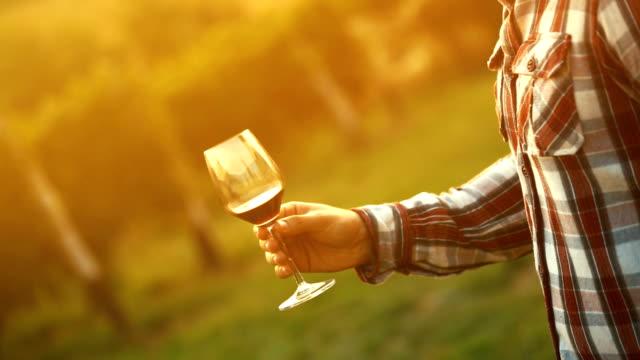 wine tasting. - tasting stock videos & royalty-free footage