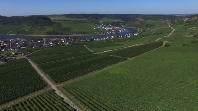wine village of nittel on upper moselle river, rhineland-palatinate, germany, and machtum, canton of grevenmacher, grand duchy of luxembourg - upper palatinate stock videos & royalty-free footage