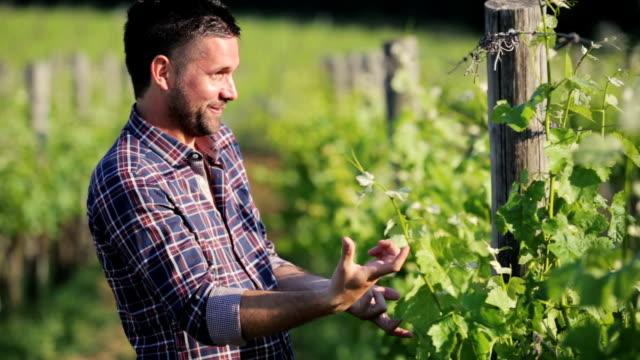 Uva y cocimiento Winegrower comprobación