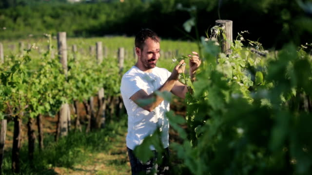 winegrower checking grape and leafes - france stock videos & royalty-free footage