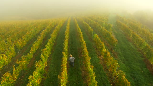 aerial winegrower checking the grape - vineyard stock videos & royalty-free footage