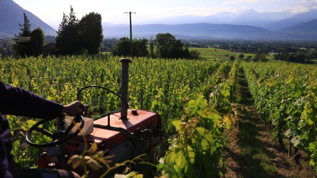 winegrower christophe tochon works on a tractor plowing to remove weed in a organic vineyard of the apremont sector in savoie on may 30, 2020 in les... - plough stock videos & royalty-free footage