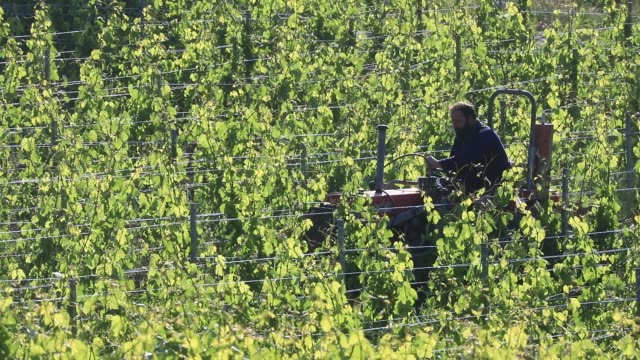 vidéos et rushes de winegrower christophe tochon works on a tractor plowing to remove weed in a organic vineyard of the apremont sector in savoie on may 30 2020 in les... - isore vincent