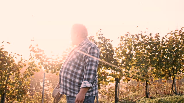 WS Winegrower mirando sobre su Vineyard