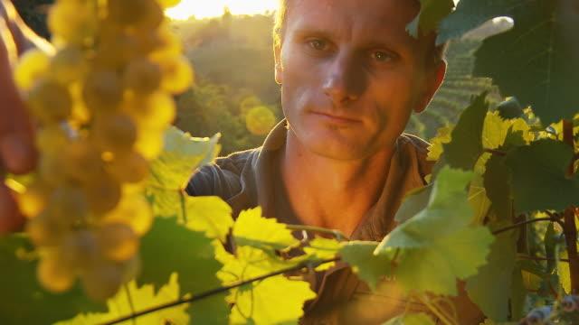 HD: Winegrower Tasting Grape In Vineyard